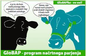 Program GloBAP
