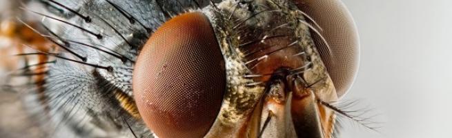 Insekti v hlevu